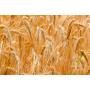Farine de blé spéciale PizzaLev